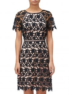 Adrianna Papell Ava Lace Trimmed A-line Dress